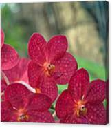 Orchid Bugs Canvas Print