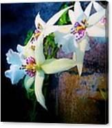 Orchid Cascade Canvas Print