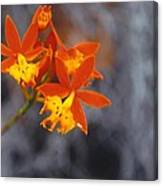 Orchid Circus Canvas Print