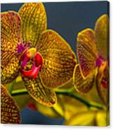 Orchid Color Canvas Print
