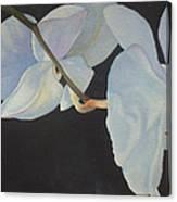 Orchid Dance II Canvas Print