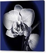 Orchid Elegance 2 Canvas Print