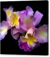 Orchid Embrace Canvas Print