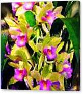 Orchid Flower Bunch Canvas Print