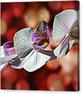 Orchid Flower Photographic Art Canvas Print