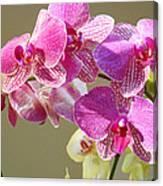 Orchid Flowers Art Prints Pink Orchids Canvas Print