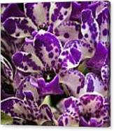 Orchid Grouping Canvas Print