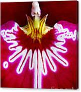 Orchid Harlequinn-pansy Orchid Canvas Print