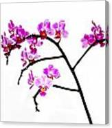 Orchid In White  Canvas Print