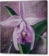 Orchid Lalia Canvas Print