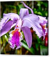 Orchid Life Canvas Print