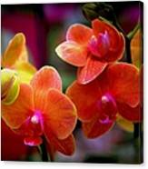 Orchid Melody Canvas Print