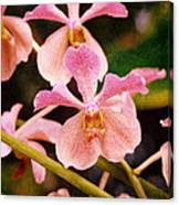 Orchid Number 17 Canvas Print