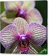 Orchid One Canvas Print