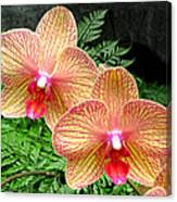 Orchid Pair Canvas Print