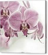 Orchid Pink Vintage Canvas Print