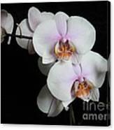 Orchid Portrait Canvas Print