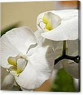 Orchid Purity Canvas Print