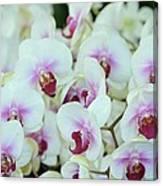 Orchid Sea Canvas Print