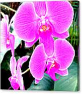 Orchid Series 1 Canvas Print