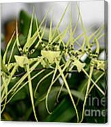 Orchid Spikes Canvas Print