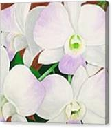 Orchid Splendor Painting Canvas Print