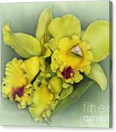 Orchid Trio Canvas Print