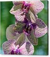 Orchid Two Canvas Print