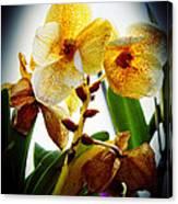 Orchid Vignette Canvas Print