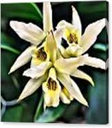 Orchid Yellow Canvas Print