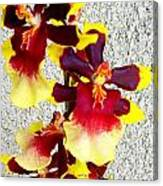 Orchids 17 Canvas Print