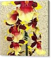 Orchids 18 Canvas Print