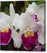 Orchids 198 Canvas Print