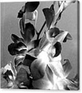 Orchids 2 Bw Canvas Print