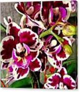 Orchids 21 Canvas Print