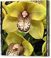 Orchids  9 Canvas Print