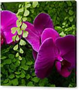 Orchids And Baby Tears Canvas Print
