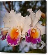 Orchid Elsie Sloan Canvas Print