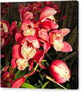 Orchids Galore Canvas Print