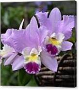 Orchids In A Basket Canvas Print
