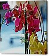 Orchids In A Window Canvas Print