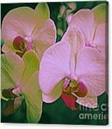 Orchids In Pink And Green Canvas Print
