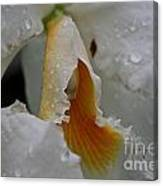 Orchid's Inner Glow Canvas Print
