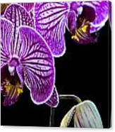 Orchids On Black Background Canvas Print