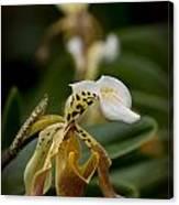 Orchids Pictures 28 Canvas Print