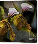 Orchids Pictures 30 Canvas Print