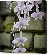 Orchids Pictures 47 Canvas Print