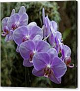Orchids Square Format Img 5437 Canvas Print