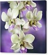 Orchids Canvas Print