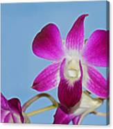 Orchids With Blue Sky Canvas Print